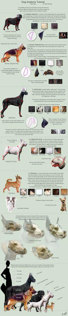64 besten Hayvan anatomisi Bilder auf Pinterest | Veterinärmedizin ...