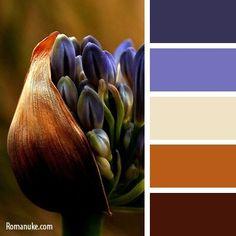 Гармония цвета.