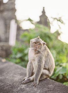 Uluwatu Temple Monkey | photography by http://www.vickigraftonphotography.com/
