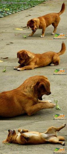 DOG BEFRIENDS A PRAYING MANTIS