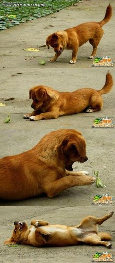 DOG BEFRIENDS A PRAYING MANTIS