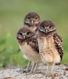 triplets! :)