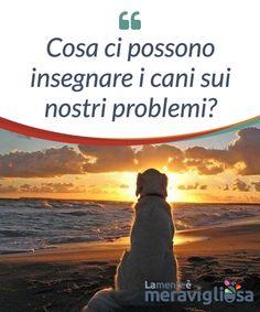 Cosa ci possono insegnare i cani sui nostri problemi?  Se siete #infelici, perché non iniziate ad #adottare un po' di più l'atteggiamento dei cani? Questi #affettuosi #animali hanno molto da #insegnarci.