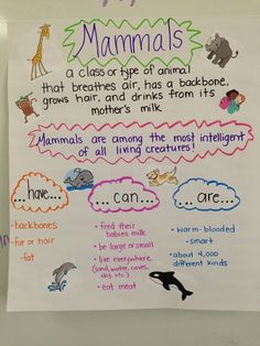 We just created this last week, the students did the resear… Mammal Anchor Chart! We just created this last week, the students did the research to discover what to add! 1st Grade Science, Kindergarten Science, Teaching Science, Science Activities, Preschool, Anchor Charts First Grade, Science Anchor Charts, Science Lessons, Life Science