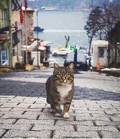 İstanbul' un  Kedileri...