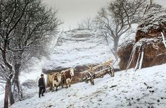Winter in Apuseni Mountains by Sorin Onişor