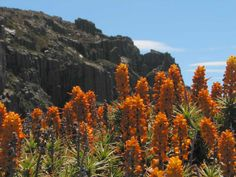 Ben Lomond National Park in Tasmania - Wildflowers abound in summer, and despite the stony plateaus there are also dense forests and moorlands that make most of us think of, say, Scotland.