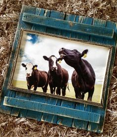 Love Corinth Blue...wish they didn't discontinue it! The cow pics were taken by the fabulous Keyser Images!