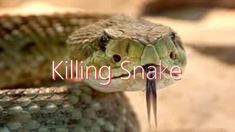 What does it mean to dream of killing a snake? Dream Meanings, Dream Interpretation, Snake, Meaning Of Dreams, A Snake, Snakes