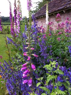 English country garden - Foxgloves and Salvia by the old barn. ~ Great pin! For Oahu architectural design visit http://ownerbuiltdesign.com