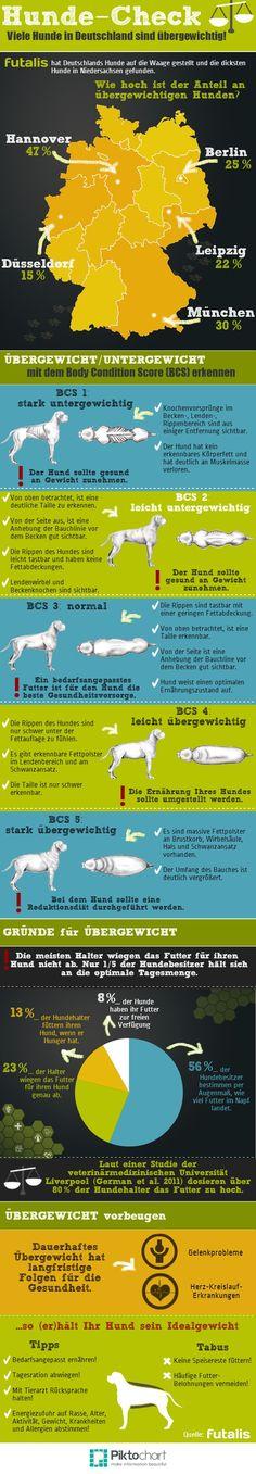 Deutschlandweiter Hunde-Check - viele Hunde sind übergewichtig! Ausführliche…
