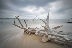 Boneyard Beach, Big Talbot Island FL Photo by Tom Schifanella — National Geographic Your Shot Florida Travel, Florida Beaches, Oh The Places You'll Go, Places To Visit, Florida Pictures, East Coast Road Trip, Driftwood Beach, Fernandina Beach, Picture Places