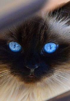 Cat Eyes by Maskeradia on Flickr. Found on flickr.com Via ayustar.tumblr.com