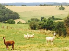 Farm Stays That Let You Get Back to Nature in Style: Royalla Luxury Farmstay in Robertson, Australia