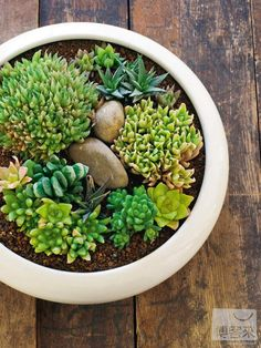 Put cool rocks from hikes in the planters