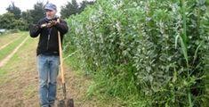 USCS Teaching Organic Farming and Gardening publications