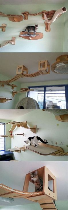 45 Ideas Diy Dog Playground Ideas Cat Trees - Teresa Molinari - You are in the right place about Cat Playground Outdoor play areas Here we offer you the most beautiful pictures about the Cat Playgroun Dog Playground, Playground Ideas, Large Cat Tree, Cat Shelves, Wall Shelving, Room Shelves, Cat House Diy, Gatos Cats, Cat Room