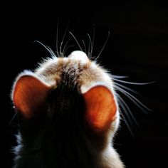 """""""Cats come and go without ever leaving."""" --Martha Curtis Cats come and go without ever leaving. Animals And Pets, Baby Animals, Funny Animals, Cute Animals, Cute Kittens, Cats And Kittens, Crazy Cat Lady, Crazy Cats, I Love Cats"""