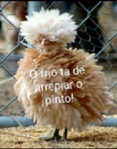 SOLARIS                           : ATÉ O PINTO TÁ SENTINDO FRIO  - Humor