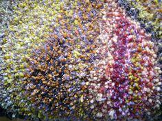 How To Dry Basil, Fiber, Weaving, Herbs, Retro, Pattern, Crafts, Modern, Manualidades