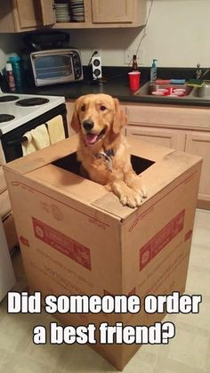 did someone order a best friend?