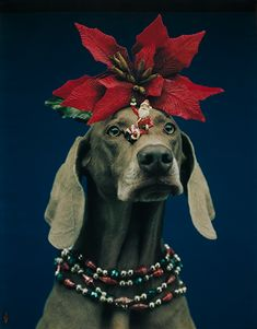 William Wegman, Points North, 1994