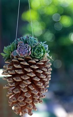 Making hampers yourself: 29 great DIY ideas with instructions- Blumenampel selber machen: 29 tolle DIY Ideen mit Anleitung succulents pinecone flowerpot make yourself - Succulents In Containers, Cacti And Succulents, Planting Succulents, Planting Flowers, Propagate Succulents, Flowers Garden, Succulent Gardening, Container Gardening, Succulent Planters