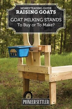 Goat Milking Stands For Homesteading: To Buy Or To Build?