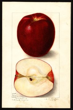 Gano Apple - Amanda Newton (USDA Comission)