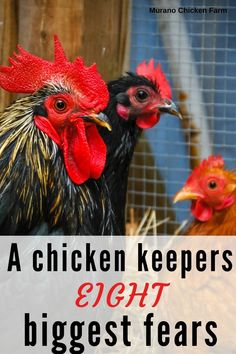 Cute Chickens, Raising Chickens, Chickens Backyard, Chicken Story, Chicken Pictures, Old Wife, Chicken Humor, Biggest Fears, Grow Your Own Food