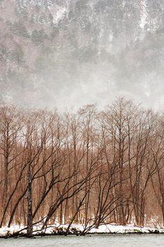 Willow Trees In Winter At Kamikochi Nagano, Japan Kamikochi, Winter In Japan, Japanese Mountains, Nagano Japan, Bare Tree, Photographs Of People, Take Better Photos, Willow Tree, Winter Trees