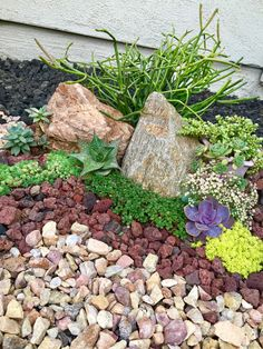Stepping Stones, Succulents, Landscaping, Outdoor Decor, Plants, Diy, Home Decor, Stair Risers, Decoration Home