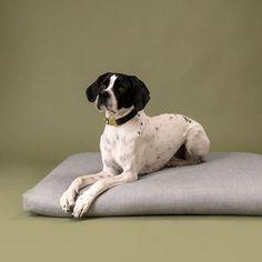 """Das Hundebett """"Liv"""" von 4Nooks ist das erste Hundebett, welches eine Matratze aus Roggenstroh hat. Das Roggenstroh stammt von deutschen Bio-Höfen, wird nach dem Ernten gründlich gereinigt, abschließend in Jutegewebe eingehüllt und fest mit Sisalgarn vernäht. Liv, Boston Terrier, Dogs, Animals, Wood Dog Bed, Dog Travel, Dog Accessories, Small Dogs, Mattress"""