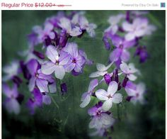 Violets Under the Snow - RdtT Treasury Challenge by Lynda P. Austin on Etsy