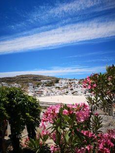 Plants, Island, Acropolis, Rhodes, Old Town, Travel Report, Flora, Plant