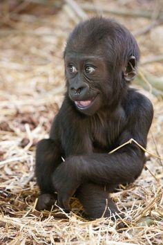 Have we had any baby gorillas. We have now! https://ift.tt/2GXWowP cute puppies cats animals