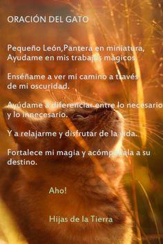 Oración del Gato