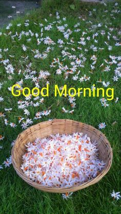 Good Morning Images in HD Collection Good Morning Beautiful Pictures, Good Morning Picture, Good Morning Flowers, Good Morning Good Night, Morning Pictures, Good Morning Wishes, Beautiful Morning, Good Morning Images, Morning Pics
