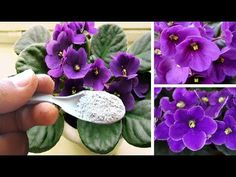 Cactus, Plantar, Growing Flowers, Gardening For Beginners, Make It Yourself, Youtube, Hydrangeas, Bananas, Flower Names