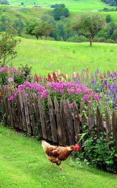 Flower garden and friends :)