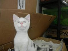 Blind Cat Rescue is a life time care sanctuary for blind, FIV & leukemia positive cats - Mickey