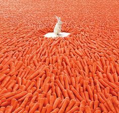 Funny pictures about Bunny's heaven. Oh, and cool pics about Bunny's heaven. Also, Bunny's heaven photos. Funny Animals, Cute Animals, Animal Fun, Wild Animals, Baby Animals, Photo Images, Orange You Glad, Orange Crush, Akita