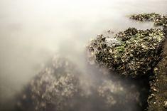 mists natural stone sea shells Photo - Visual Hunt