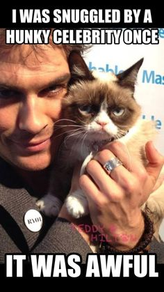 Grumpy Cat on Ian Somerhalder. Grumpy cat needs to get it together..  Oh what I wouldn't do to be that cat in that moment