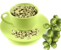 Extreme GC Bean made with Svetol will help you to get in shape. Made with svetol GCB, a green espresso concentrate containing a remarkable organization of phytonutrients.