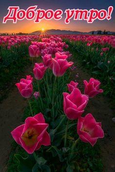 Красивые Цветы, Красивые Места, Удивительная Природа, Желтые Розы, Тюльпаны, Пейзажная Фотография, Морские Пейзажи, Природа, Лорд