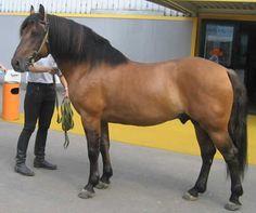 vyatka horse   Vyatka horse