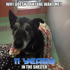 Senior dog, homeless since 2005 after katrina hit. PLEASE share this! Blessings to you all.