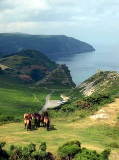 Valley of the Rocks.. Exmoor