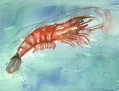 Image result for Watercolor Shrimp